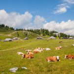Day trip to velika Planina