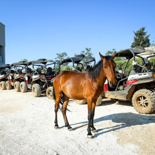 Dubrovnik offers incredible experience of buggy safari, that will reveal the best of this amazing town - local food, great views and lots of fun!